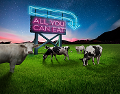 DLF Fiber Energy - All you can eat